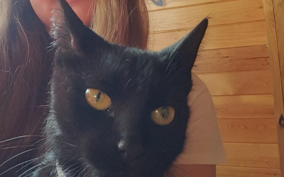 Zbiórka Mój koci kącik -mała Pusia - zdjęcie główne