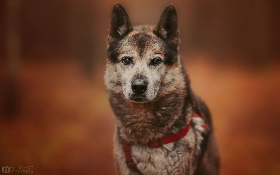 Zbiórka GIENEK porzucony 9 letni psiak - zdjęcie główne
