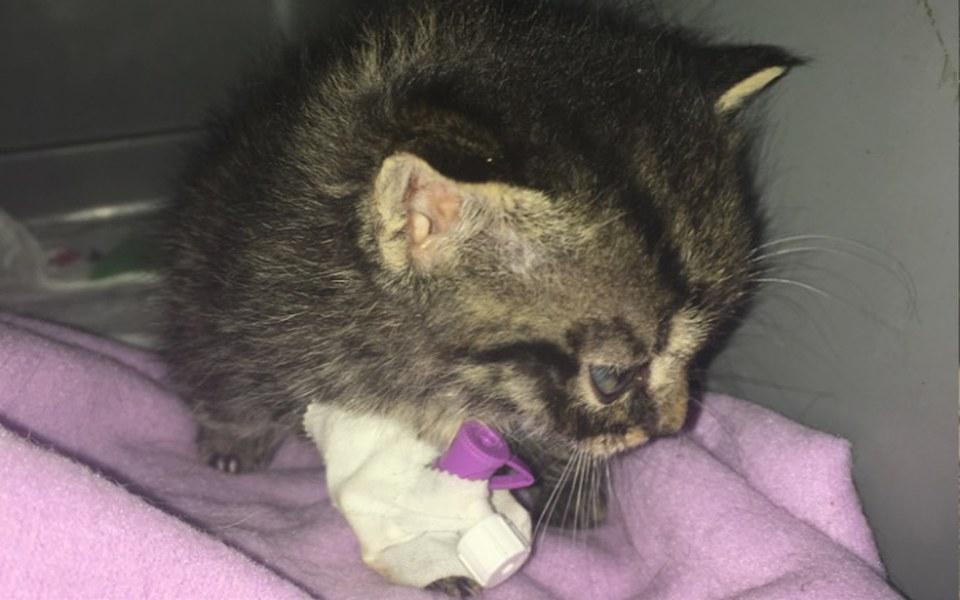 Zbiórka 280 gram kocie zbiera na leczeni - zdjęcie główne