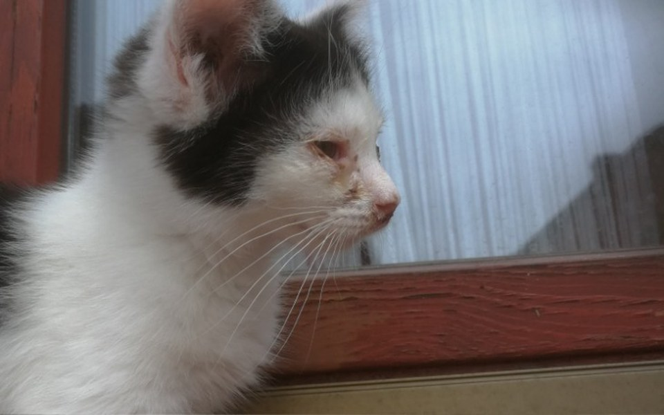Zbiórka Na leczenie kociej bidy - zdjęcie główne