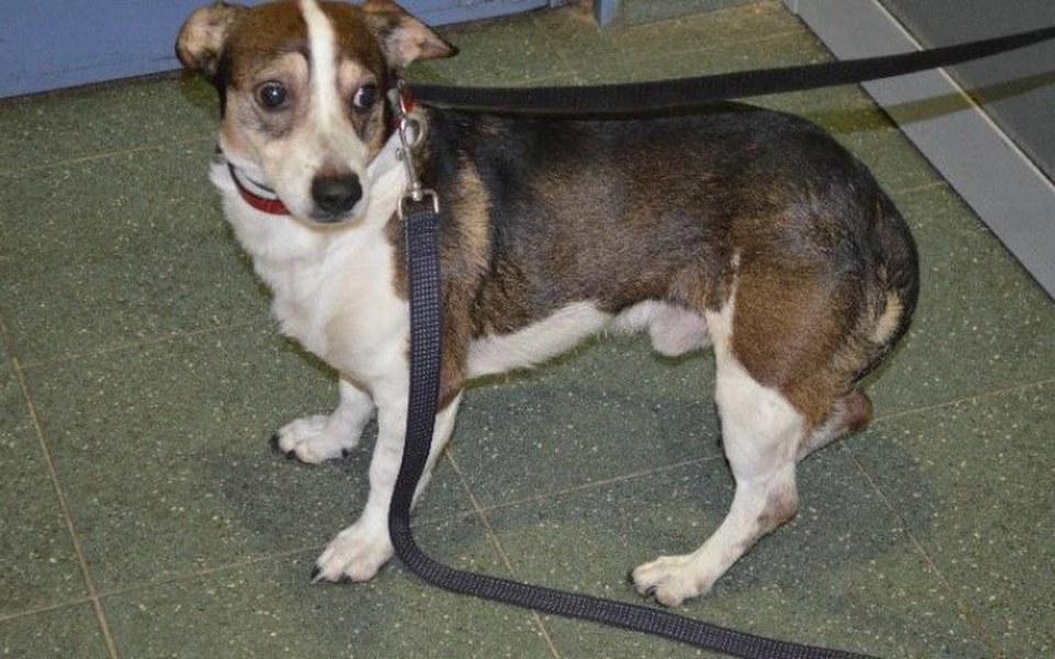 Zbiórka Psy na Paluchu - zdjęcie główne
