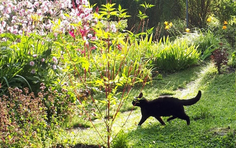 Zbiórka Koty Pani Krysi - zdjęcie główne