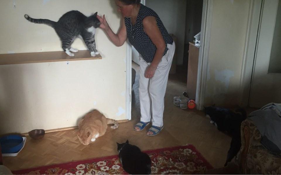 Zbiórka 24 Koty potrzebuja pomocy! - zdjęcie główne