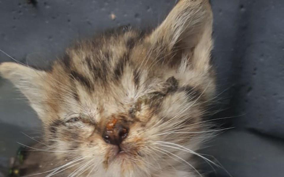Zbiórka Kociaki zjadane przez larwy much - zdjęcie główne
