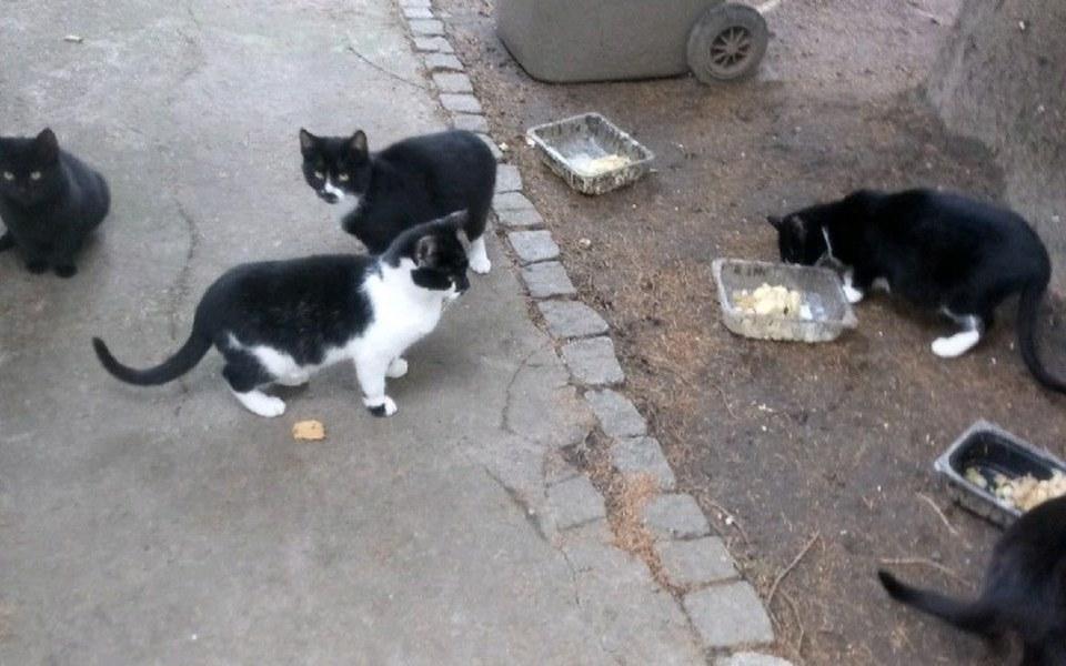 Zbiórka Kotki bezdomne - zdjęcie główne
