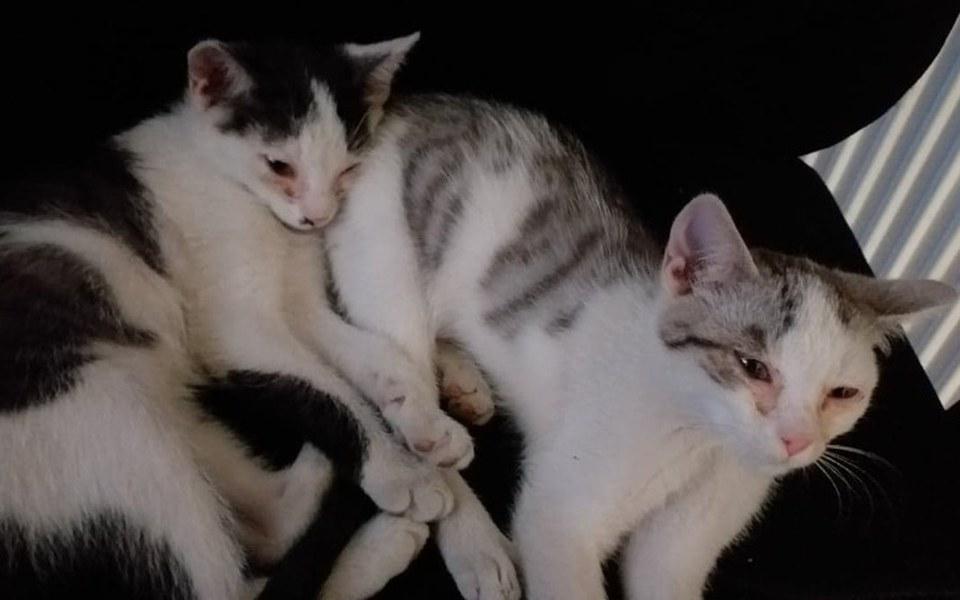 Zbiórka Leczenie uratowanych kotek - zdjęcie główne