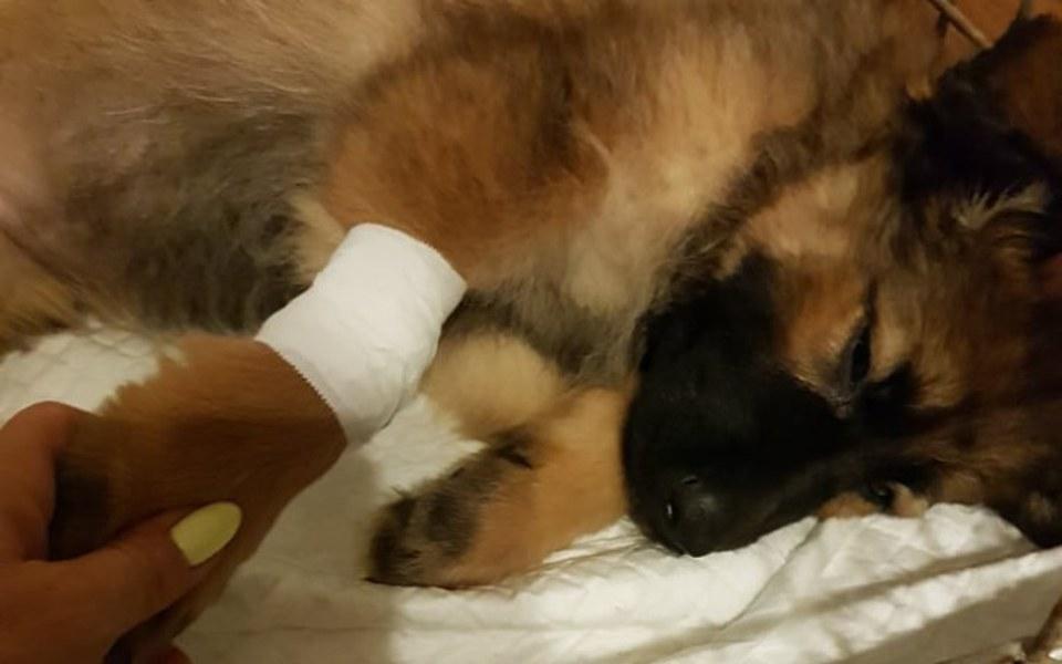 Zbiórka Psie dziecko Lolka z parwowirozą - zdjęcie główne