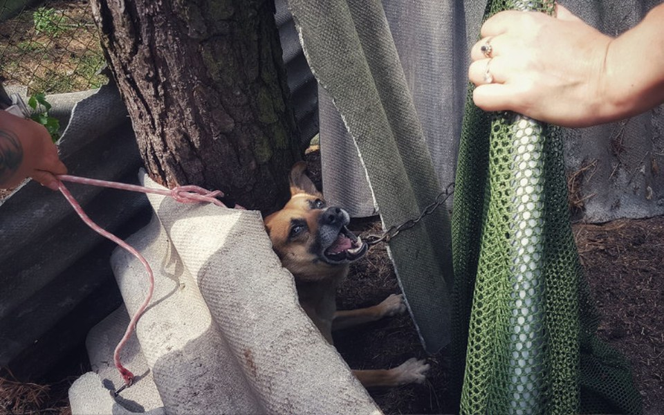 Zbiórka Zakończ dramat psów z Kozienic - zdjęcie główne