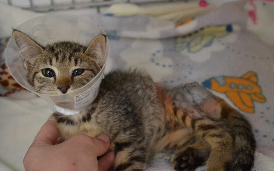 Zbiórka Pomóż uratować maleńką Malinkę - zdjęcie główne