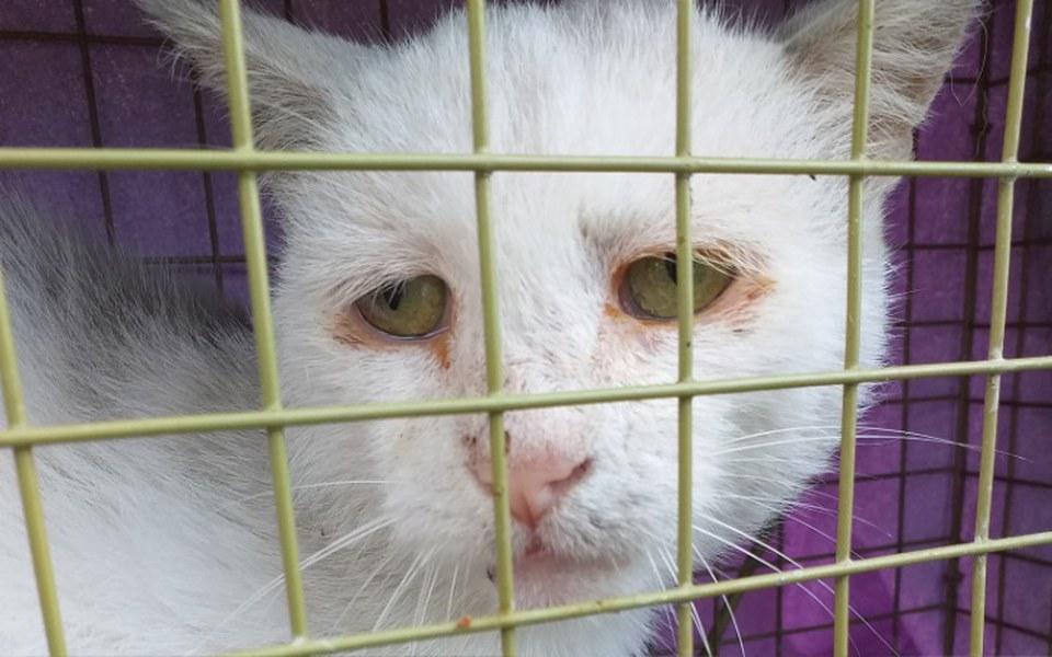 Zbiórka Smutna starość bezdomnego kota - zdjęcie główne