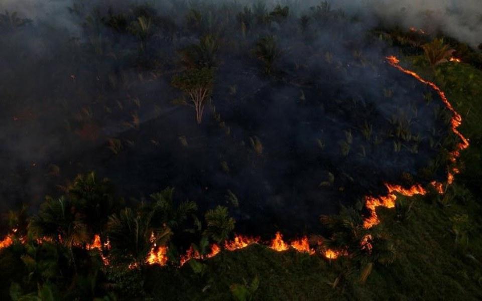 Zbiórka Safe.Earth Pomoc dla Amazonii - zdjęcie główne
