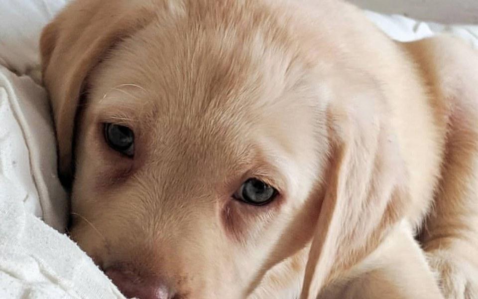 Zbiórka Chory pies POMOCY - zdjęcie główne