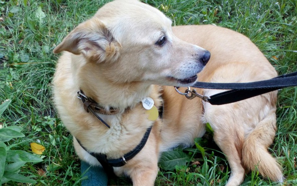 Zbiórka Na leczenie psa po wypadku - zdjęcie główne