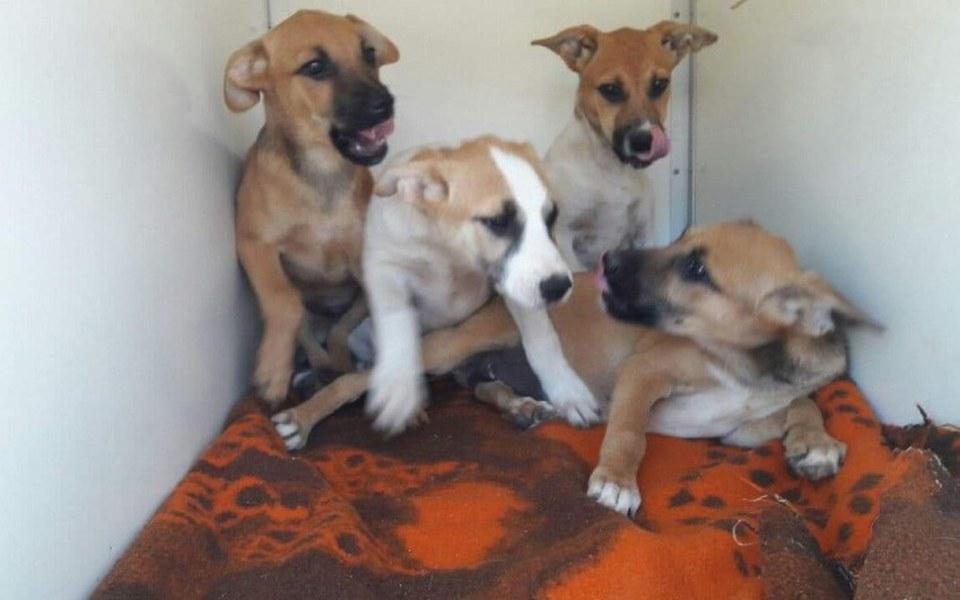 Zbiórka transport szczeniaków z Radys - zdjęcie główne