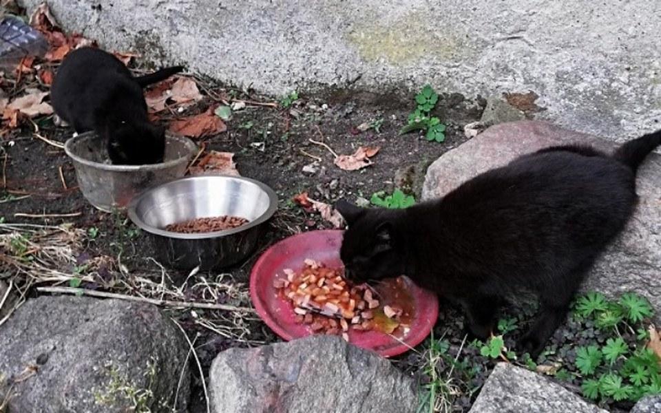 Zbiórka Karma dla kotów z pustego domu - zdjęcie główne