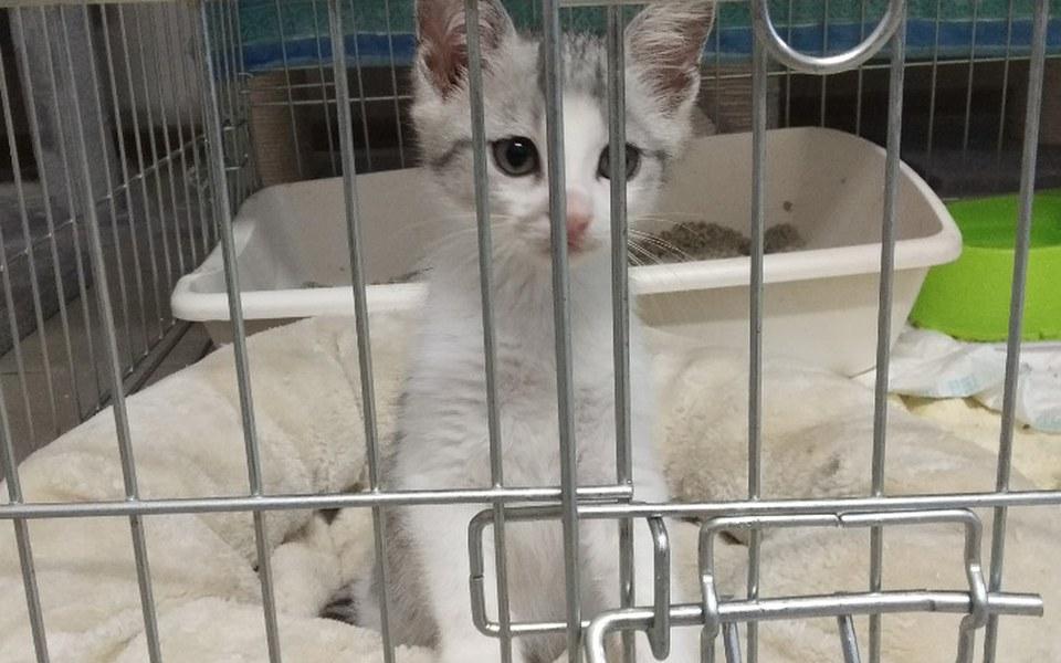 Zbiórka Jedyny ratunek dla kotów - pomóż - zdjęcie główne