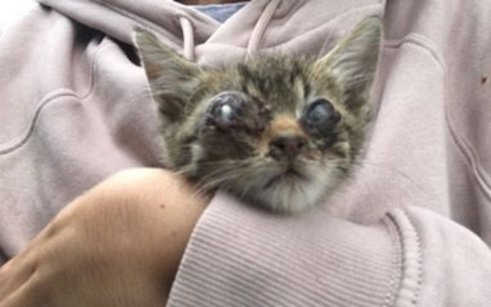 Zbiórka Kotek z lasu - zdjęcie główne