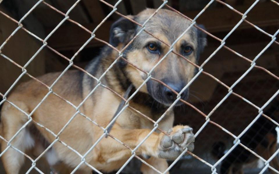 Zbiórka Psy marzą o wyjściu z boksu   - zdjęcie główne