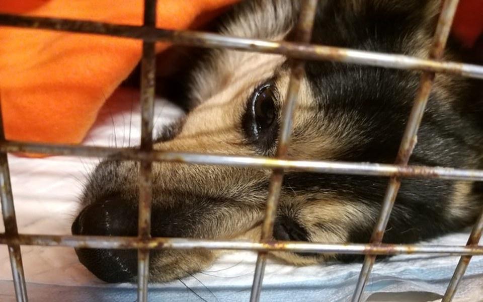 Zbiórka Ile jest warte życie psa? - zdjęcie główne