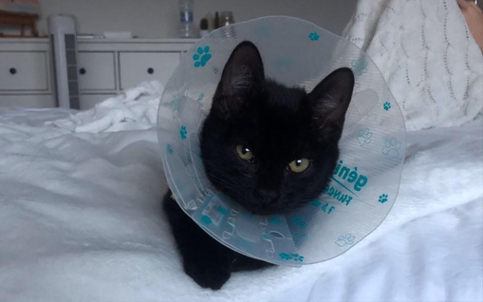 Zbiórka Operacje kości udowej kotka - zdjęcie główne