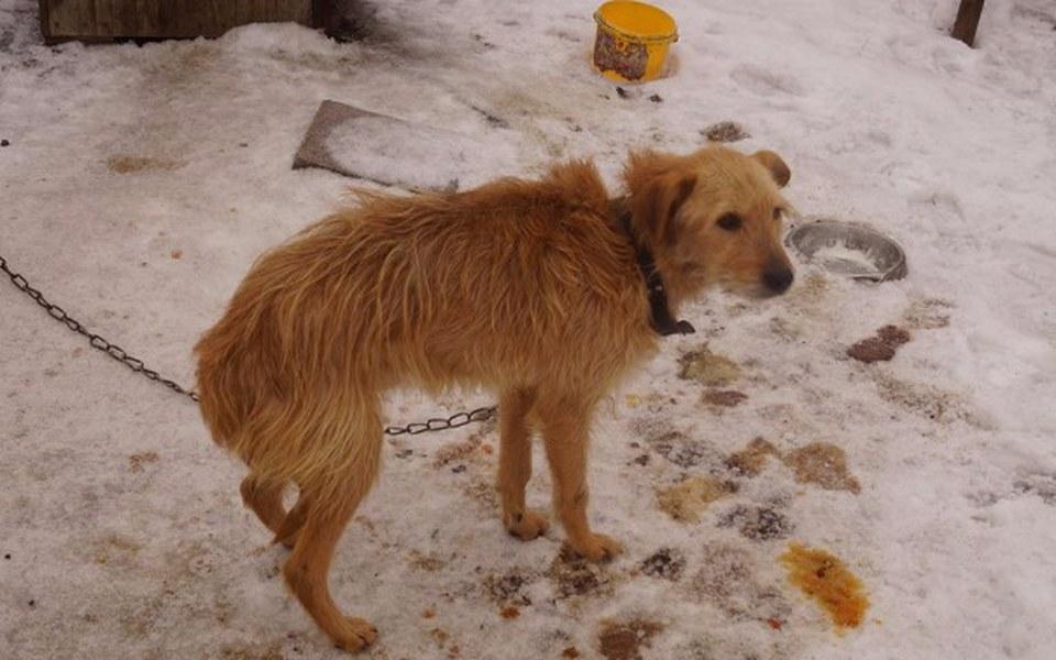 Zbiórka Otruty pies z łańcucha - zdjęcie główne