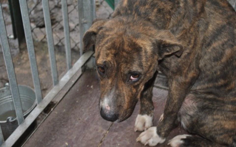 Zbiórka Spłata długu za hotel dla psów - zdjęcie główne