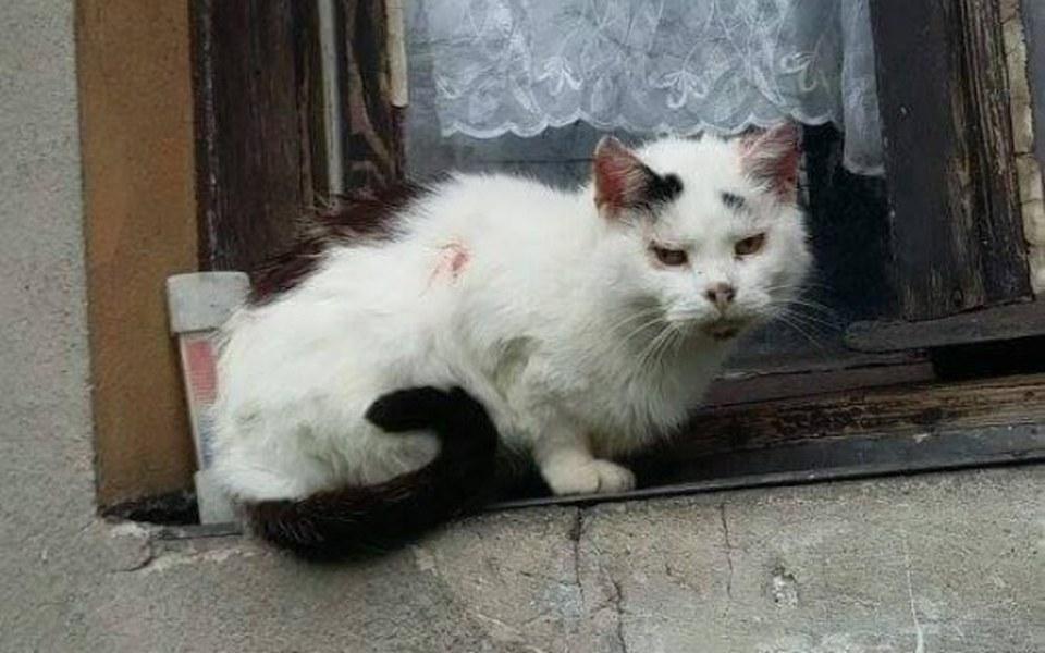 Zbiórka Klara - kotka chora i stara - zdjęcie główne