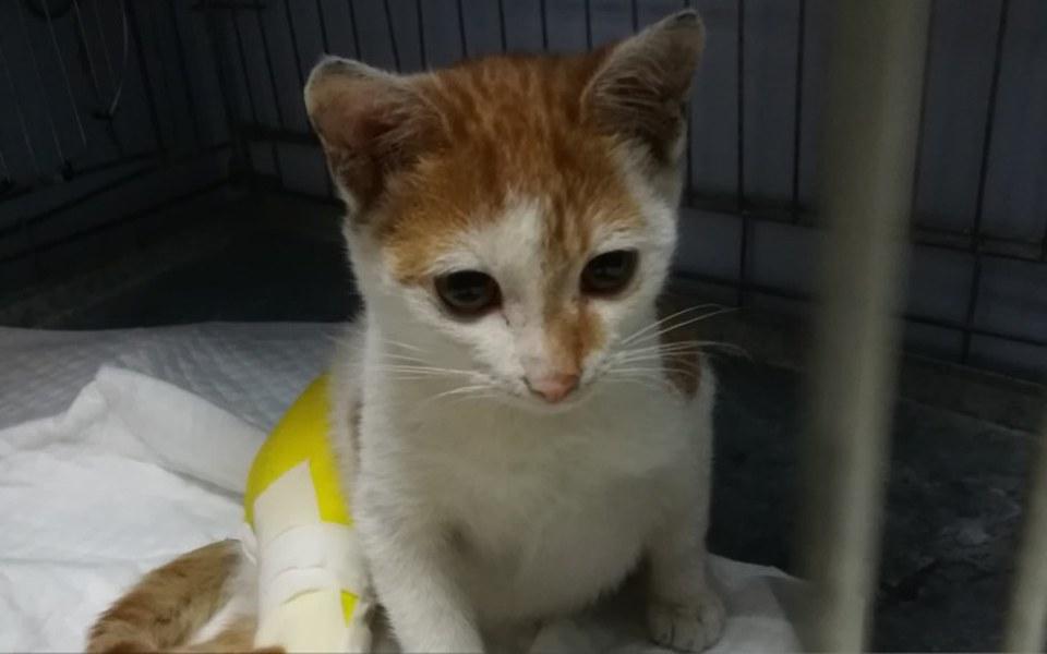 Zbiórka Femurek - kot po wypadku - zdjęcie główne
