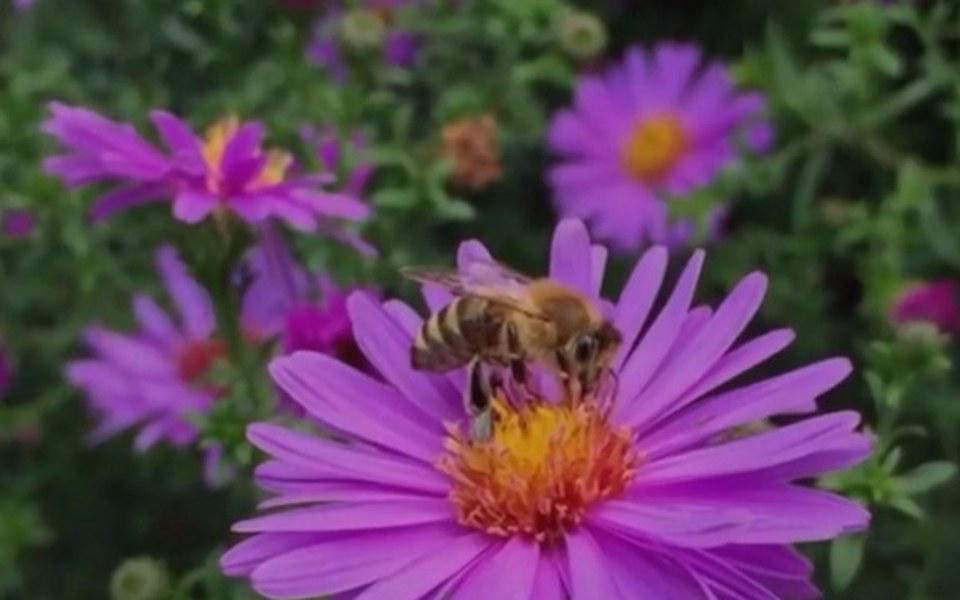 Zbiórka Finansujesz - pszczoły ratujesz - zdjęcie główne